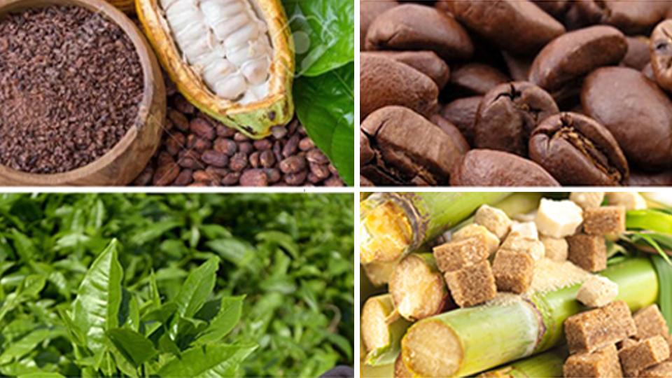 Synthèse de l'Etude de positionnement stratégique des branches Cacao, Café, Thé et Sucre au Cameroun